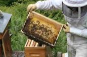 Godillot apiculteur